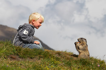 Murmeltier mit Kind